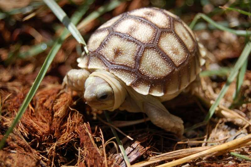 how to look after a tortoise in hibernation