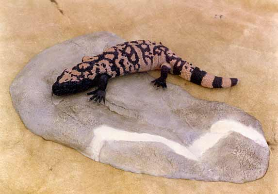 Gila Monster Facts and Pictures | Reptile Fact