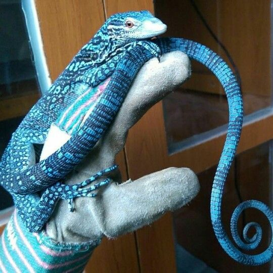 South Island Reptiles