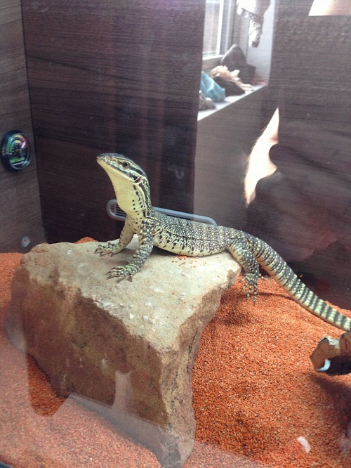 Argus Monitor Cage
